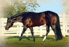Potential Career - AQHA Stallion, Western Pleasure
