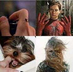 20 Best Funny Photos for Monday Morning. Serving only the best funny photos in 2019 that will help you laugh today. Marvel Jokes, Funny Marvel Memes, Crazy Funny Memes, Really Funny Memes, Stupid Funny Memes, Funny Relatable Memes, Haha Funny, Funniest Memes, Marvel Vs