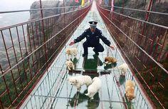 glass bridge china - Google Search