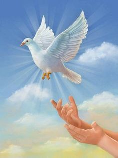 Dove Pictures, Wild Animals Pictures, Angel Pictures, Jesus Pictures, Nature Pictures, Christian Artwork, Christian Images, Spiritual Images, Religious Images
