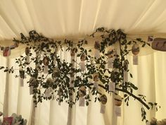A tree branch hanging over the side of the marquee decorated with pictures and messages dedicated to Helen and Steve