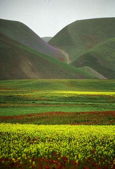 Blooming Desert, via Flickr. Taken in Maimana, Faryab, Afghanistan. Posted by robysaltori (Roberto Saltori).