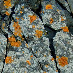 Pretty, pretty lichen matte dark grey microglitter and sparser light grey glitters, with matte goldenrod yellow medium hex glitters Natural Forms, Natural Texture, Patterns In Nature, Textures Patterns, Art Grunge, Growth And Decay, Slime Mould, Mushroom Fungi, Belleza Natural