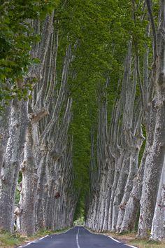 Avenue of plane trees by Joachim Wendenburg