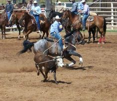 Team Roper, Cowboy Pictures, Bull Riding, Great Life, Us Travel, Rodeo, A Team, Cowboys, Ranch