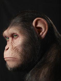 """Rise of the Planet of the Apes"" - Kazuhiro Tsuji"