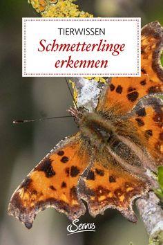 Wenn die Schmetterlinge erwachen, ist der Lenz nicht mehr weit. Die feenhaften Schönheiten fliegen freilich nur auf Gärten, in denen die Natur ihren Lauf nehmen darf. Aber erkennen Sie auch alle gängigen Arten? Animals, Insects, Animales, Animaux, Animal, Animais