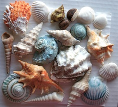Edible Chocolate Filled Candy Seashells 20 - great for cake decorating, gift giving, favors, and stand alone. $121.98, via Etsy.
