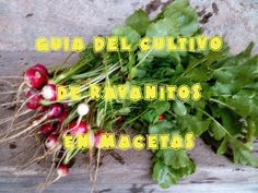 http://www.naturnatur.es Cultivo de rabanitos en macetohuerto (huerto facil)