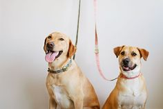 Meet L.A.'s Raddest Dogs  — & Copy Their Style #refinery29  http://www.refinery29.com/pet-accessories#slide-11  Sup, dudes.    Bruce and Santos are both wearing a See Scout Sleep Collar and Leash.