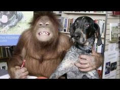 MERAVIGLIOSE STORIE D'AMICIZIA MySocialPET | Video