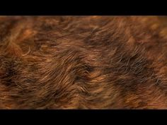The Secrets to Realistic Fur in Blender - YouTube