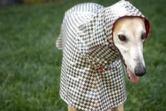 greyhound raincoat