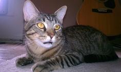 Mouth breathing cat! #CrosbyTheCrazyChristmasCat