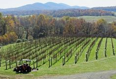 The view from the patio at Delaplane Cellars, one of our local wineries not to be missed.