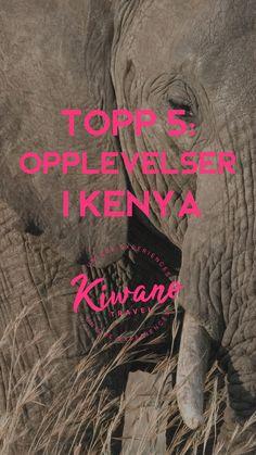 Vi har samlet våre ambassadører tips på topp 5 opplevelser du må få med deg i Kenya. Safari, Lake Nakuru, Mombasa, Diani beach, Maasai Mara, Luftballongsafari, kokkekurs, lokal matopplevelse Kenya, matkultur, Sagana river, adrenalinfylte opplevelser og rafting. Diani Beach, Mombasa, Rafting, Kenya, Safari, Tips, Movie Posters, Travel, Voyage