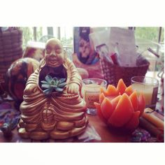 Buddha Cactil Cactus Land