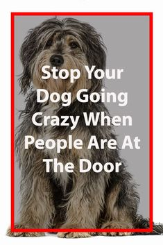 Stop Your Dog Going Crazy When People Are At The Door Training Your Puppy, Dog Training Tips, Potty Training, Agility Training, Training Classes, Training Videos, Dog Agility, Training School, Crate Training