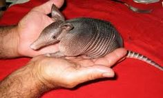 XOXOXOX ARMADILLO LOVE XOXOXOX I can't wait for Dealer Days, this Saturday, at the Brass Armadillo Kansas City Come Barter Your Best Deal During Dealers Days, Saturday Aug 17, 2013  9am -9pm  The possibilities are endless! Dealer breakfast starts at 8am until gone. Call for more info : 888-847-5260