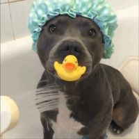 Shower time for baby pit