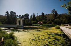 Jardín Botánico - Viña del Mar by Erwin Thieme, via Flickr  #ViñadelMar  #Turismo #Chile #ThisisChile #VRegión #HotelSanMartín #HSMChile #JardínBotánico #Naturaleza