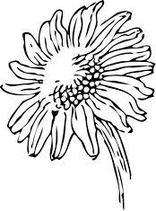 sunflower 2 black white line art tattoo tatoo SVG Sunflower Tattoo Sleeve, Sunflower Tattoo Shoulder, Sunflower Tattoo Small, Sunflower Drawing, White Sunflower, Sunflower Flower, Flower Petals, Flower Tattoo Meanings, Flower Tattoos