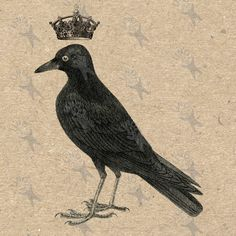Antique image Crow with crown Vintage picture Instant Download printable clipart digital graphic for scrapbooking,  bags, etc HQ 300dpi by UnoPrint on Etsy