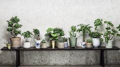 planter i vinduskarm - Google-søk