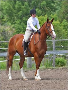 Irish Draught (Draft) For Sale | Chestnut Mare -  WikiHorseWorld.com