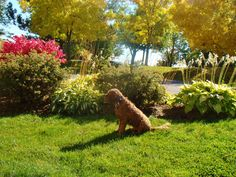 Early fall colours and Pete the Dog