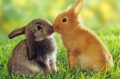 Bunny kisses.