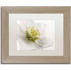 Trademark Fine Art 'White Helleborus' Canvas Art by Cora Niele, White Matte, Birch Frame, Size: 11 x 14, Multicolor
