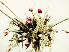 Fieldwork Flowers||Portland