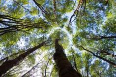 Redwood National and State Parks, California -visited as a child