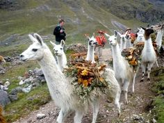Follow the footpaths of the Inca to the roof of the Andes, passing ancient Tambo…