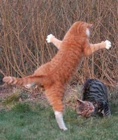 Looks like flying marley attack cat!!