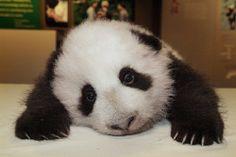sad-panda1.jpg (500×334)