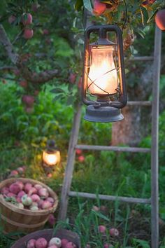 lamp in the apple orchard at dusk