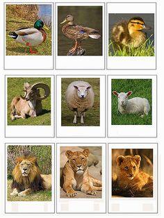 Pro Šíšu: Montesorri for Everyone Animal Activities, Montessori Activities, Free Preschool, Preschool Science, Mother And Baby Animals, Animal Classification, Primary Science, Animal Silhouette, Montessori Materials