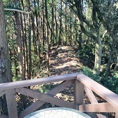 【treehouse8】さんのInstagramをピンしています。 《晴れて気持ちいい日です! 森のコーナーで一休みして 午後も頑張ります(o^^o) ・  #camp #life #tent #バーベキュー #グランピング #キャンプ場 #焚き火 #草刈り #子ども #ツリーハウス#生き物 #自然 #キャンプ飯 #キャンプ #千葉 #冬キャン #家具 #アンティーク #露天風呂付き客室 #ハンモック #貸別荘 #gw #森 #森林浴🌳》