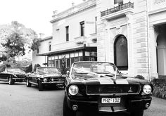 Mustangs in Black 1966 and 1967 GT Convertible Mustangs including our Shelby GT350 at Kamesburgh Gardens for a wedding shoot.