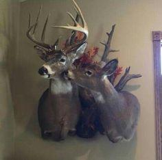 Buck and doe mount