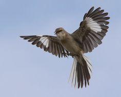 To Kill a Mockingbird by Dalton.west