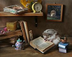 A Casual Day In The Life Of Two Adorable Hedgehogs - World's largest collection of cat memes and other animals Hedgehog Art, Happy Hedgehog, Cute Hedgehog, Alpacas, African Hedgehog, Little Critter, Cute Little Animals, Cross Paintings, Cat Memes