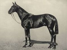 Craig An Eran(1921)Sunstar- Maid Of The Mist By Cyllene. 4x4 To Bend Or, 5x5 To Hermit & Macaroni. Won 1921 2000 Guineas(Eng), Eclipse S(Eng), 2nd Epsom Derby(Eng).