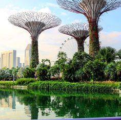"10 Likes, 2 Comments - Sandra (@sandrinezi) on Instagram: ""#myphotographywork#myphotography#myphototime#myclicks#singapore#singaporetrip#singaporecity#garden#gardenlove#gardenbythebay#park#magicktrees#trees#plants#skyscraping_architecture#asia#asiatrip#asiancountry#"""