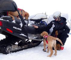 Become part of CARDA and save people from avalanches with a good dog, a sled, or some skis