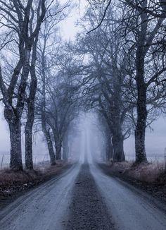 https://flic.kr/p/Rxh2Ab | foggy road