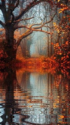 Autumn Reflections... Aren't you glad you live in a world where there are Octobers......
