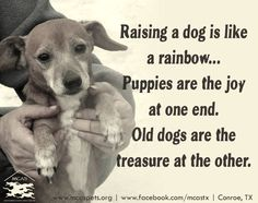 Raising a dog is like a rainbow... Puppies are the joy at one end. Old dogs are…